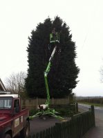 Extreme hedge cutting